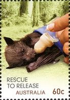 [Wildlife Caring - Rescue to Release, type DLE]