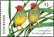 [Birds - Finches of Australia, type EMY]