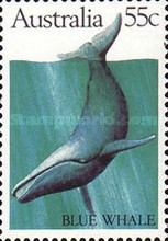 [Whales, type WQ]