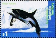 [Whales and Dolphins, Typ DA]