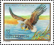 [Birds - White-tailed Eagle, Typ CMT]