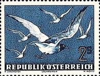 [Airmail - Birds, type RN]