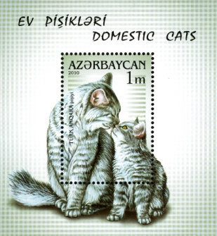 [Domestic Cats, type ]