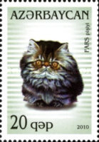 [Domestic Cats, type ACC]