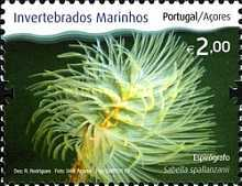 [Marine Invertebrates from the Azores, type JU]