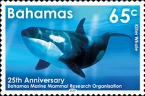 [The 25th Anniversary of the BMMRO - Bahamas Marine Mammal Research Organisation, type BEI]