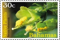 [Definitives - Native Plants, type BEP]