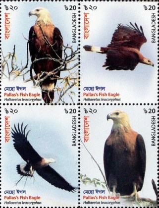 [Birds - Fish Eagle, type ]
