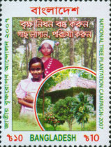 [National Tree Plantation Campaign, type AEP]