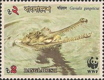 [Endangered Wildlife - Gharial, type JG]
