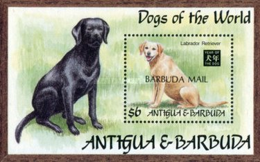 [Dogs of the World - Chinese New Year, Year of the Dog - Issue of 1994 of Antigua & Barbuda Overprinted