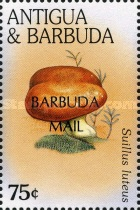[Fungi - Issues of 1996 of Antigua & Barbuda Overprinted