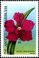 [Orchids of the World - Issues of 1997 of Antigua & Barbuda Overprinted