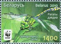 [WWF - Dragonfly the Green Snaketail, type ACP]