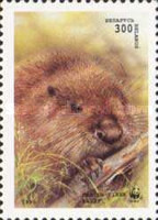 [European Beaver, type CG]