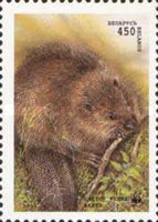 [European Beaver, type CI]