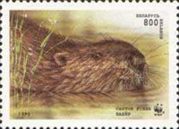 [European Beaver, type CJ]