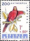 [Exotic Birds, Typ AAS]