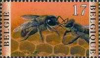 [Insects - Bees, Typ CAW]