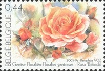 [Ghent Flower Show - Roses, Typ CYT]