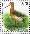 [Birds - Black-Tailed Godwit, Typ DCP]