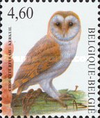 [Barn Owl, type DTN]