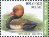 [Registrated Mail - Red-Crested Pochard, Typ EZL]