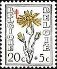 [Flowering Plants - The Struggle against Tuberculosis, Typ OV]