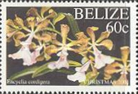 [Christmas - Orchids, type ACG]