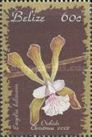 [Christmas - Orchids, Typ ACP]