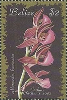 [Christmas - Orchids, type ACS]