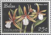 [Christmas - Orchids, type AEW]