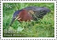 [Birds of Belize, type AGC]