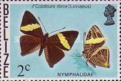 [Butterflies of Belize, Typ K]