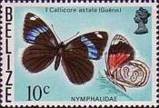 [Butterflies of Belize, Typ O]