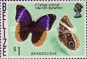 [Butterflies of Belize, type U]
