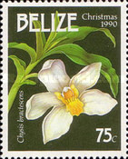 [Christmas - Orchids, type VG]