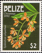[Christmas - Orchids, type VI]
