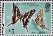 [Butterflies of Belize, Typ W]