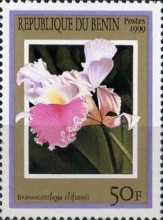 [Orchids, Typ ADK]