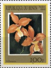 [Orchids, Typ ADL]