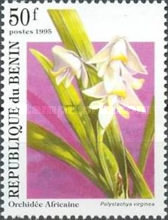 [Orchids, Typ RI]