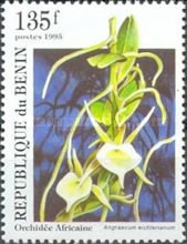 [Orchids, Typ RL]