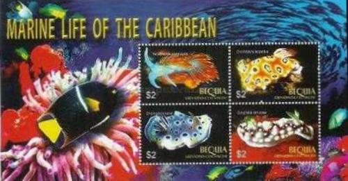 [Marine Life of the Caribbean, Typ ]