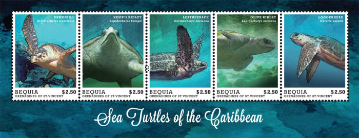 [Sea Turtles of the Caribbean, Typ ]
