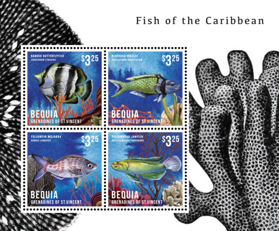 [Fish of the Caribbean, Typ ]