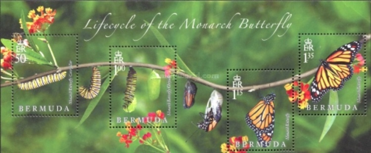 [Butterflies - Lifecycle of the Monarch Butterfly, Typ ]