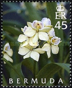 [The 50th Anniversary of the Orchid Society, Typ ACA]