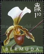 [The 50th Anniversary of the Orchid Society, Typ ACC]