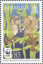 [WWF Issue - Lined Seahorse, Typ AGP]